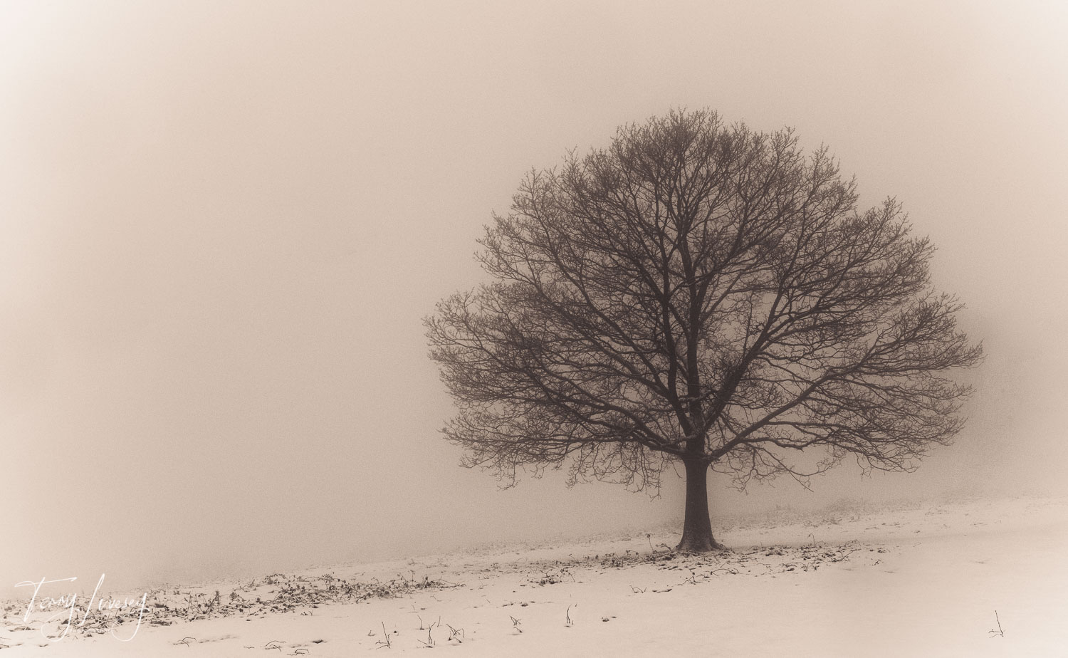 The dense snow and mist cover the landscape and reduce visability to a lone tree. There is something serenely peaceful in such isolated visibility.