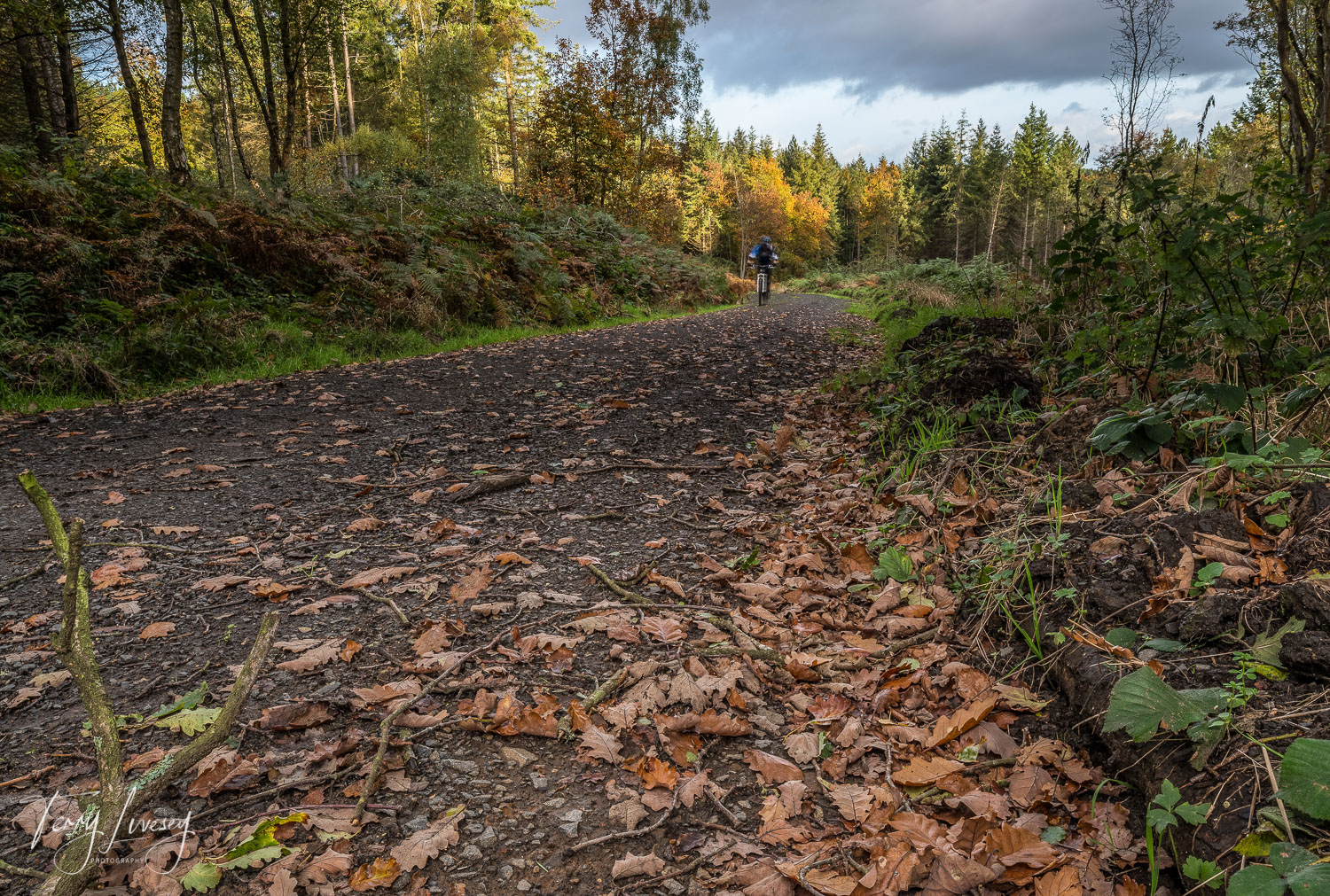 The Wyre Forest is a very bike friendly area, with miles and miles of paths and off-road tracks to explore.