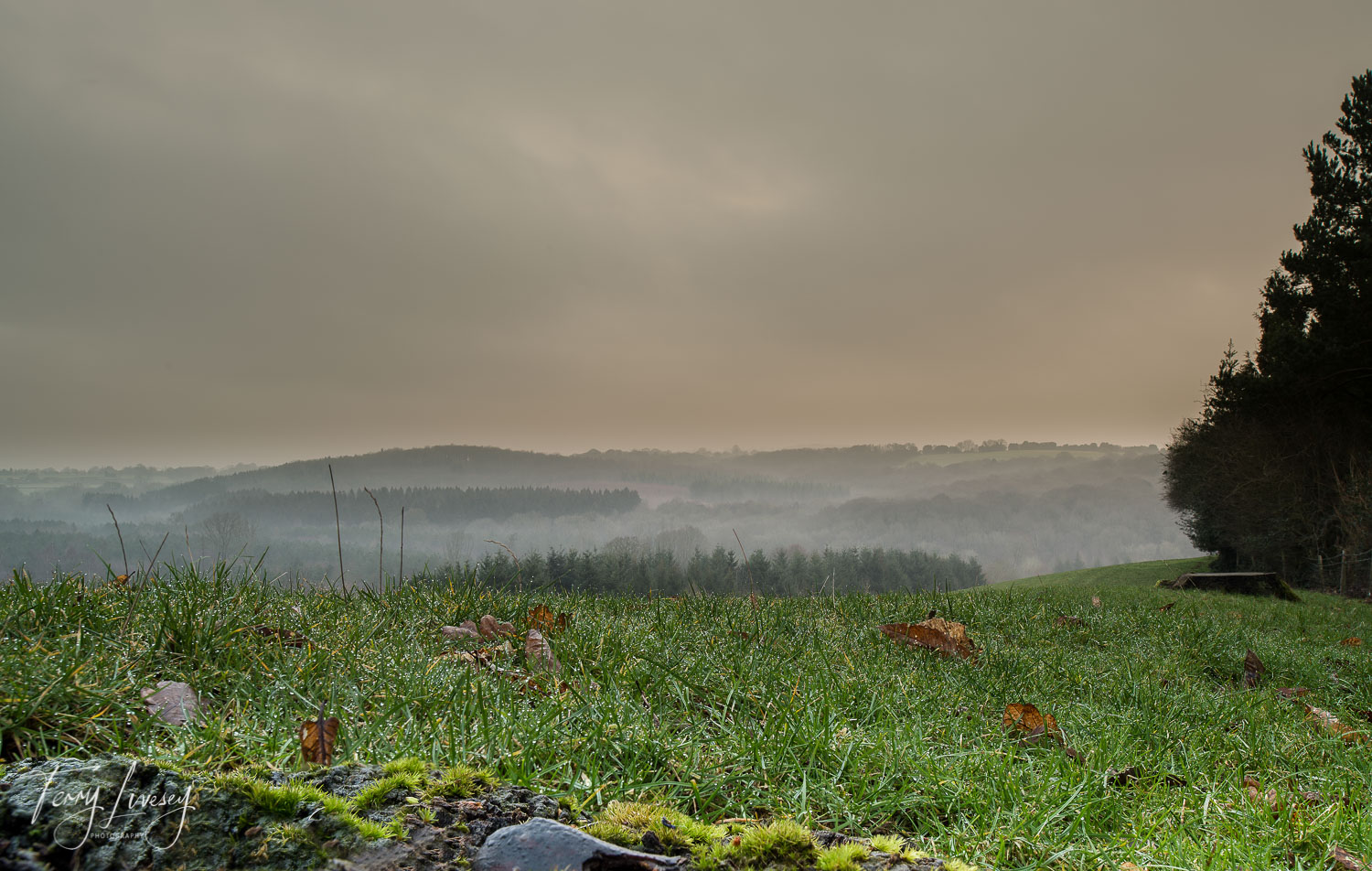 Watching the mist roll over the hills and inbetween trees is quite mesmerizing. This was taken from a vantage point on the outskirts of Bodenham Arboretum, while sitting on the dew soaked grass, and made getting up early in the morning worth while.