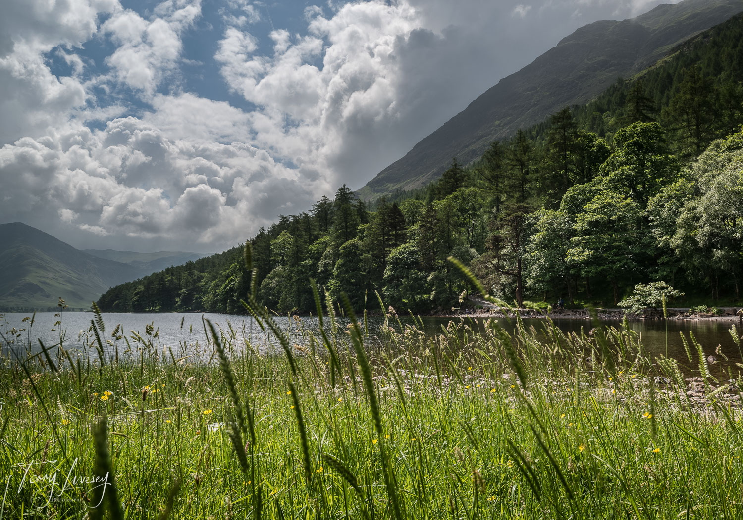 Taken through the grasses of lake Buttermere in the Lake District.