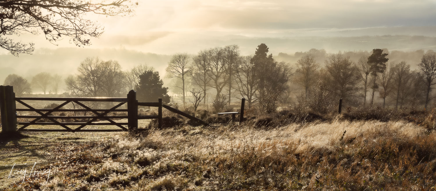 A small break in the morning mist allowed the diffused sun light to shine through. Kinver Edge is a well known local attraction and provides something magical on every visit.